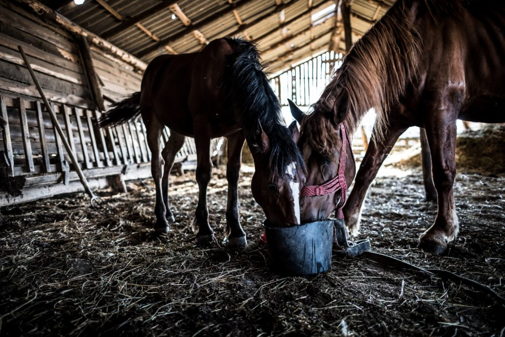 two horses in a pole barn